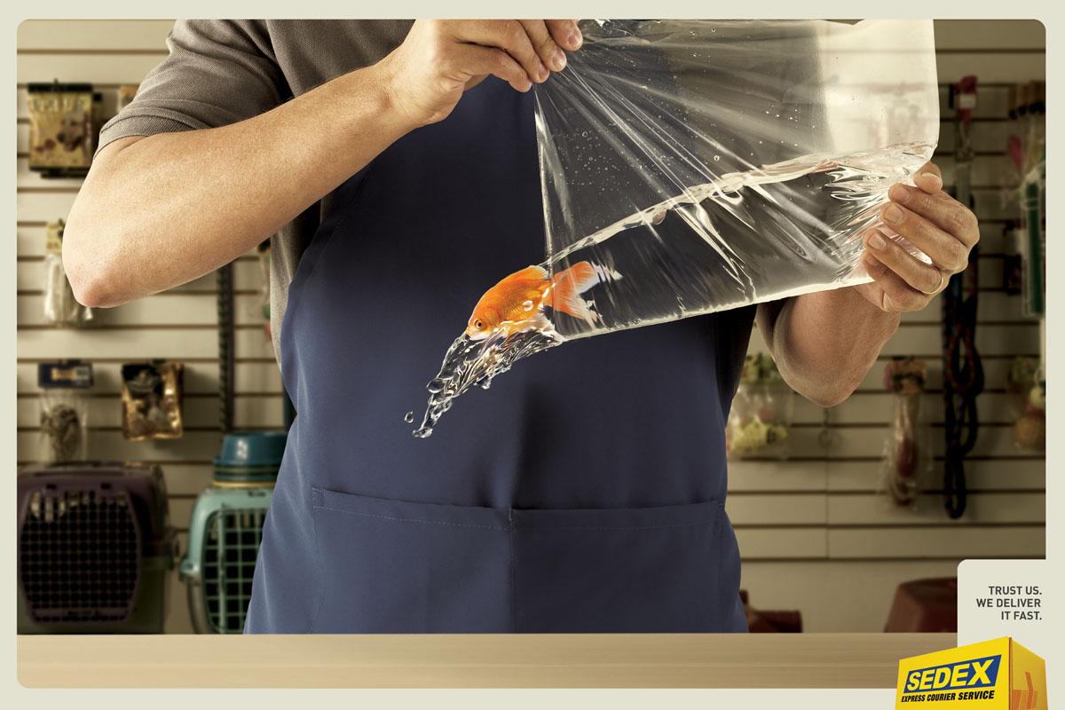 Gold-Fish-o